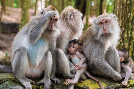 Monkey Forest Ubud. Gianyar regency in Bali.