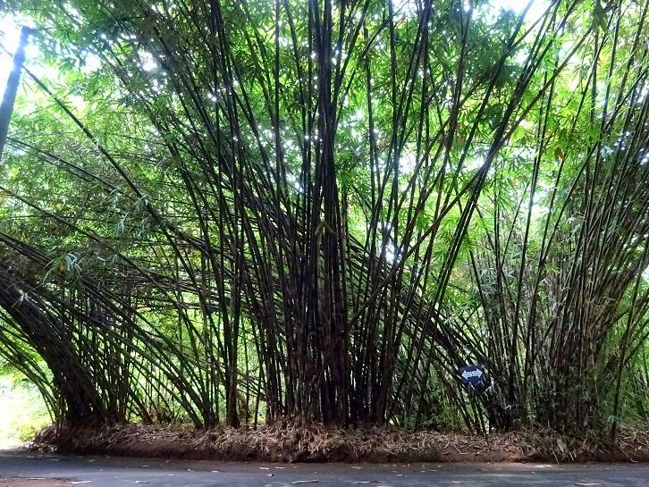 Bamboo Forest, Desa Penglipuran