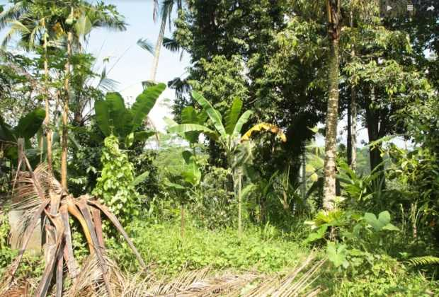 North Ubud land for sale