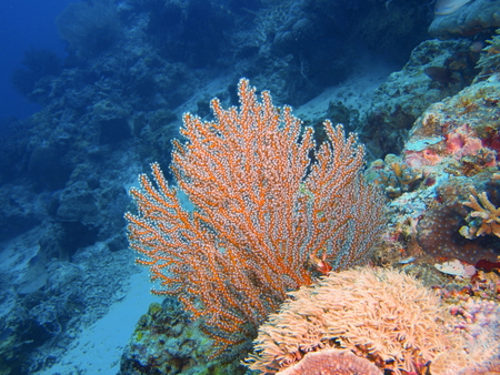 Pemuteran, Menjangan Island, Bululeng regency, Bali