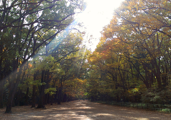 2013年11月下鴨神社・糺の森