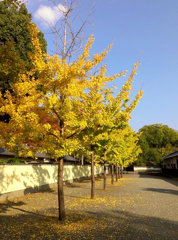 2014年11月京都御苑の紅葉1