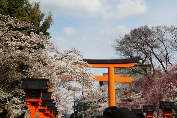 2014年4月花見、平野神社1