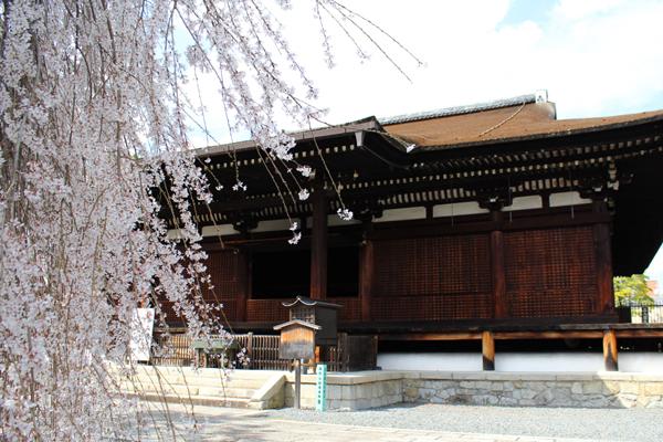 2014年4月花見、大報恩寺(千本釈迦堂)2