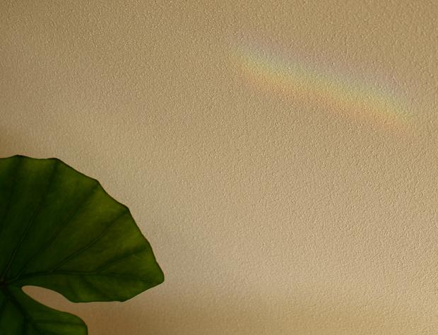 店内の壁に現れた小さな虹