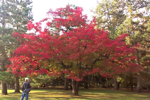 2014年11月京都御苑の紅葉2