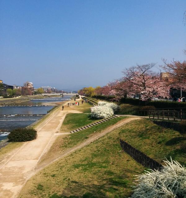 2015年二条河端東側の桜咲き始め