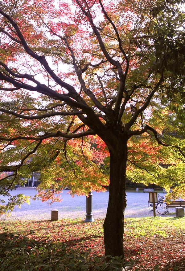 2014年11月京都御苑の紅葉3