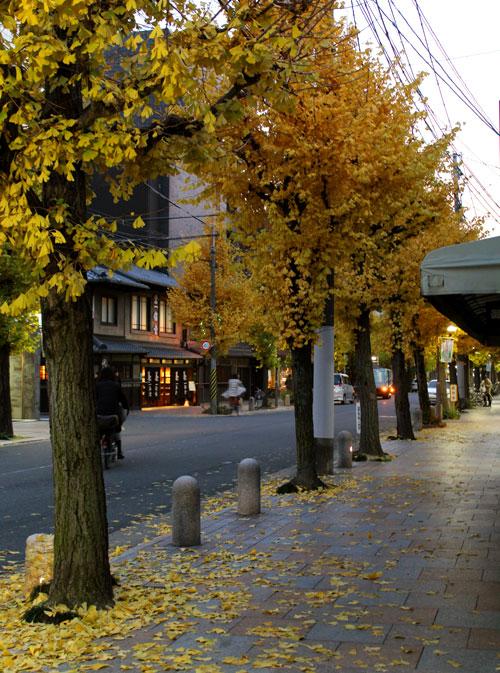 2013年12月寺町通の紅葉した銀杏並木