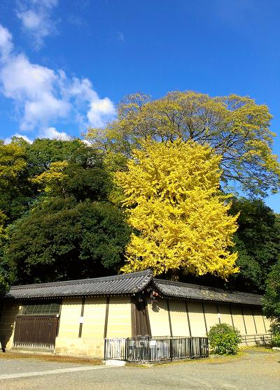 2013年11月の京都御苑の紅葉1