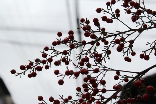 2014年1月初旬京都寺町夷川の千両