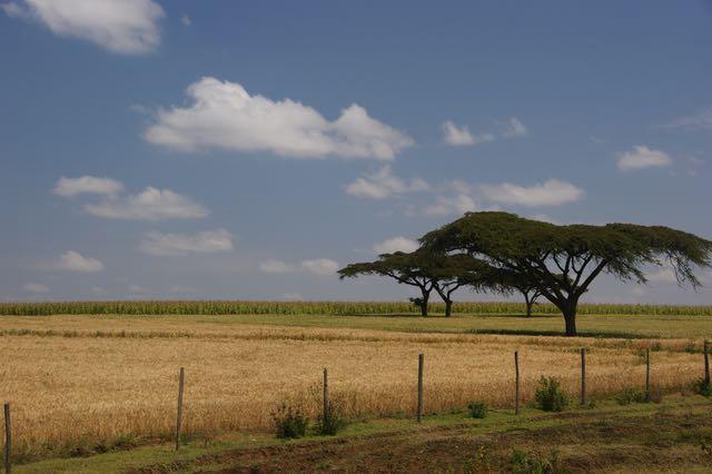 Slow Down - Resilienztraining in Kenia - Laikipia