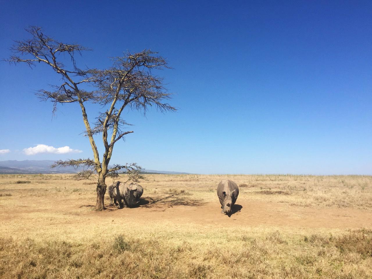 Stressbewältigungsseminar in Kenia - Solio Ranch