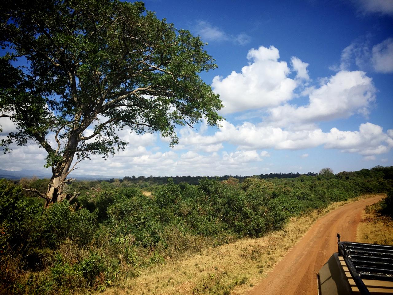 Stressbewältigungsseminar in Kenia - Aberdares