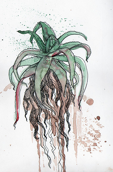 """Aloe"" (South Africa), watercolours & fineliner, 2015"