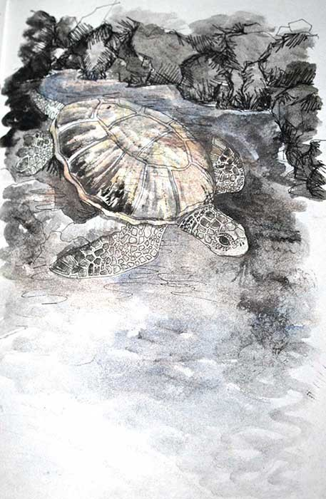 """Turtle"" (Hawaii), wax pastels & watercolours, 2014"