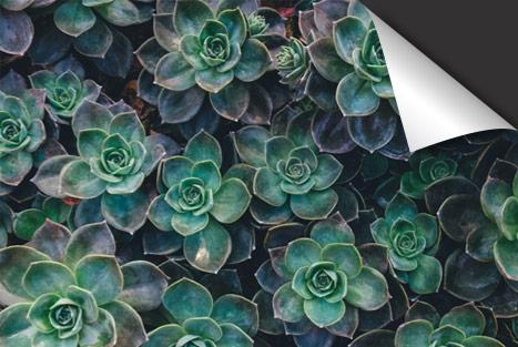 Vetplant Inductie Beschermer