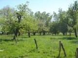 Streuobstwiese  Lebensraum des Gartenrotschwanzes (Foto: O. Gellißen)