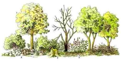 Lebensraum Hecke:  1. Baumschicht, 2. Strauchschicht, 3. Wurzelstock, 4. Lesesteinhaufen, 5. Streuschicht, 6. Krautschicht, 7. Holzhaufen, 8. Totholz