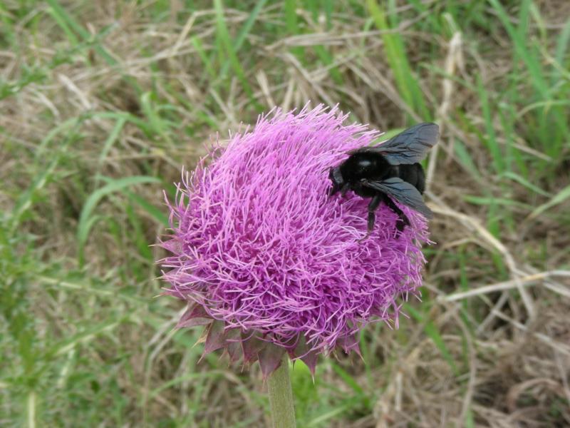 mmhh diese Blüte scheint zu munden?