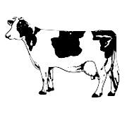 Trockenkauartikel vom Rind