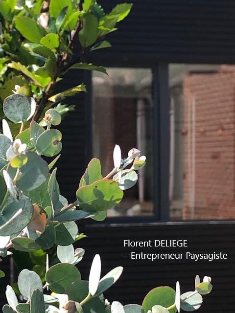 Paysagiste aménagement terrasse et jardin