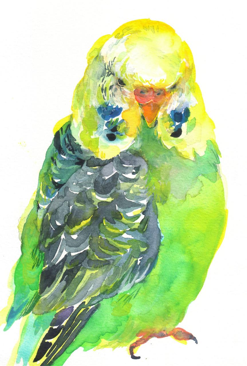 """""""ジャンボセキセイインコ""""  water color,paper 10×14.8cm"""
