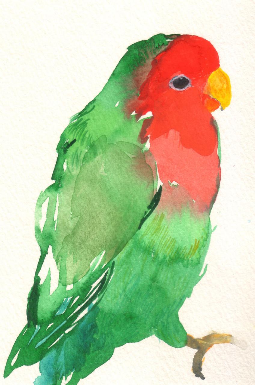 """""""コザクラインコ""""  water color,paper 10×14.8cm"""