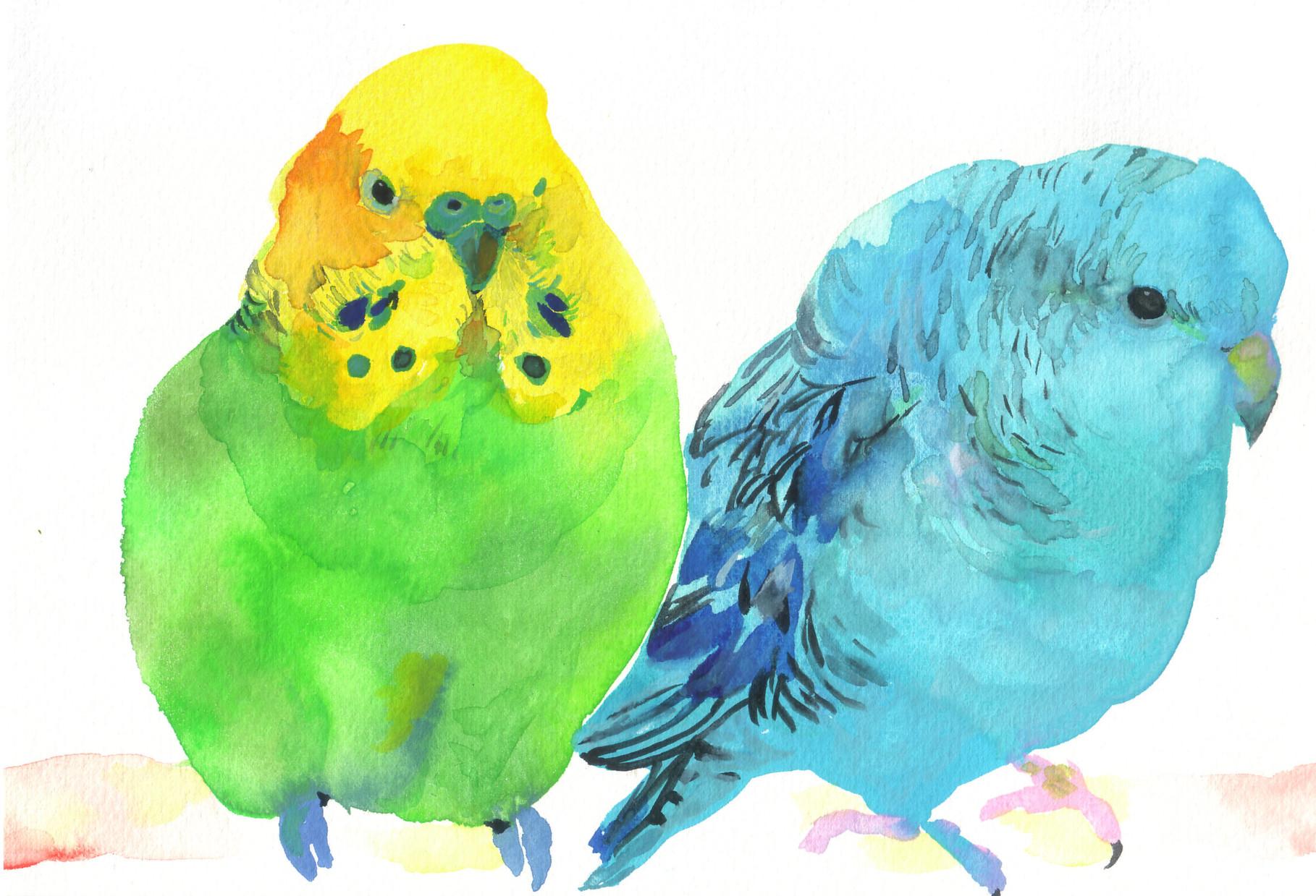 """""""セキセイインコとサザナミインコ""""  watercolor,paper 10×14.8cm"""