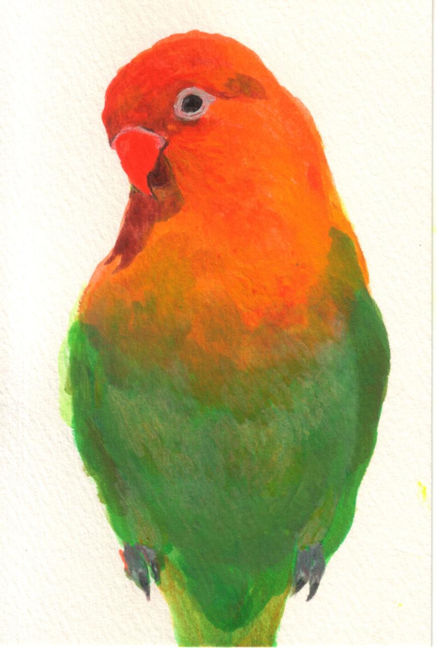 """""""ルリコシボタンインコ""""  watercolor,paper 10×14.8cm"""