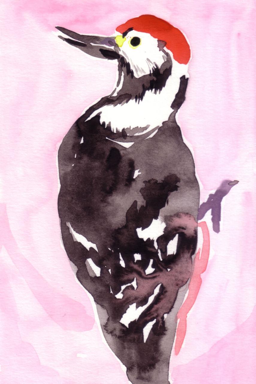 """""""アカゲラ""""  watercolor,paper 10×14.8cm"""