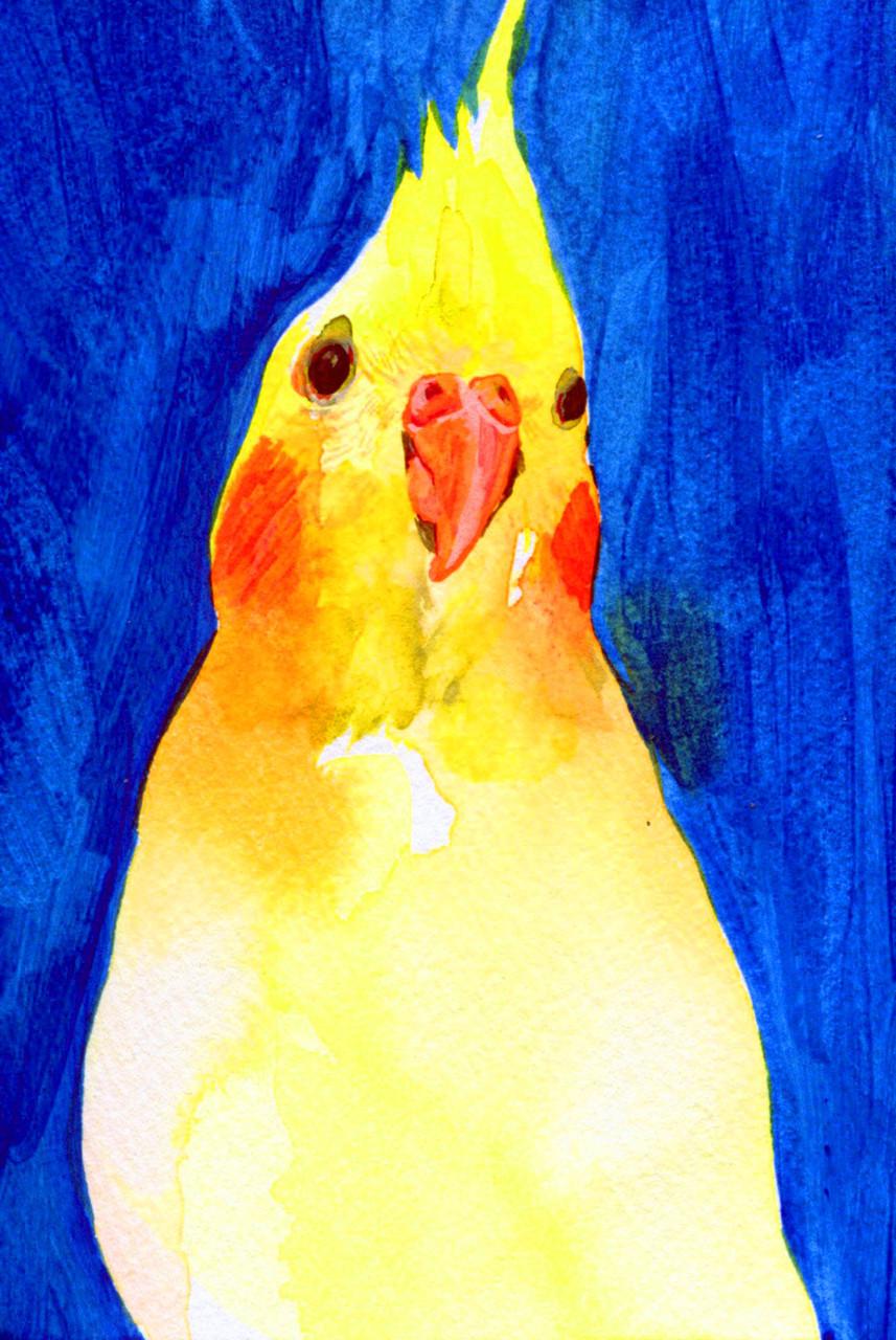 """""""オカメインコと青""""  watercolor,paper 10×14.8cm 2015"""