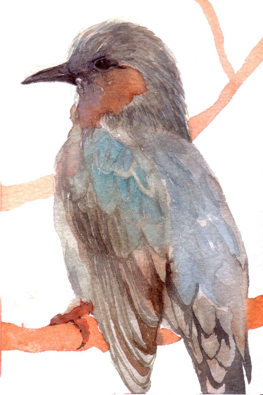 """""""ヒヨドリ""""  watercolor,paper 10×14.8cm"""