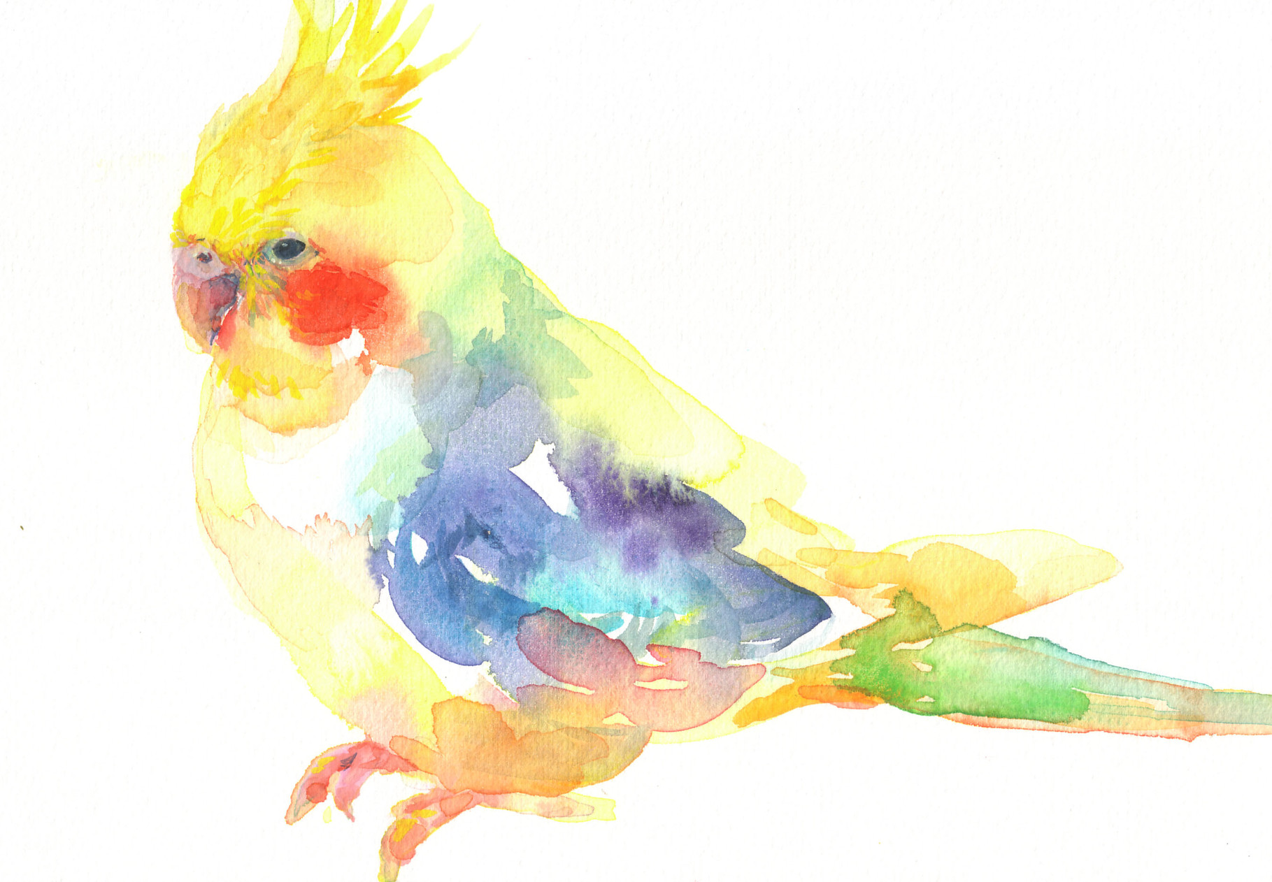 """オカメインコ""  watercolor,paper 10×14.8cm"