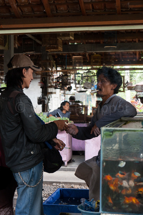 Indonésie - Yogyakarta - Marché aux oiseaux
