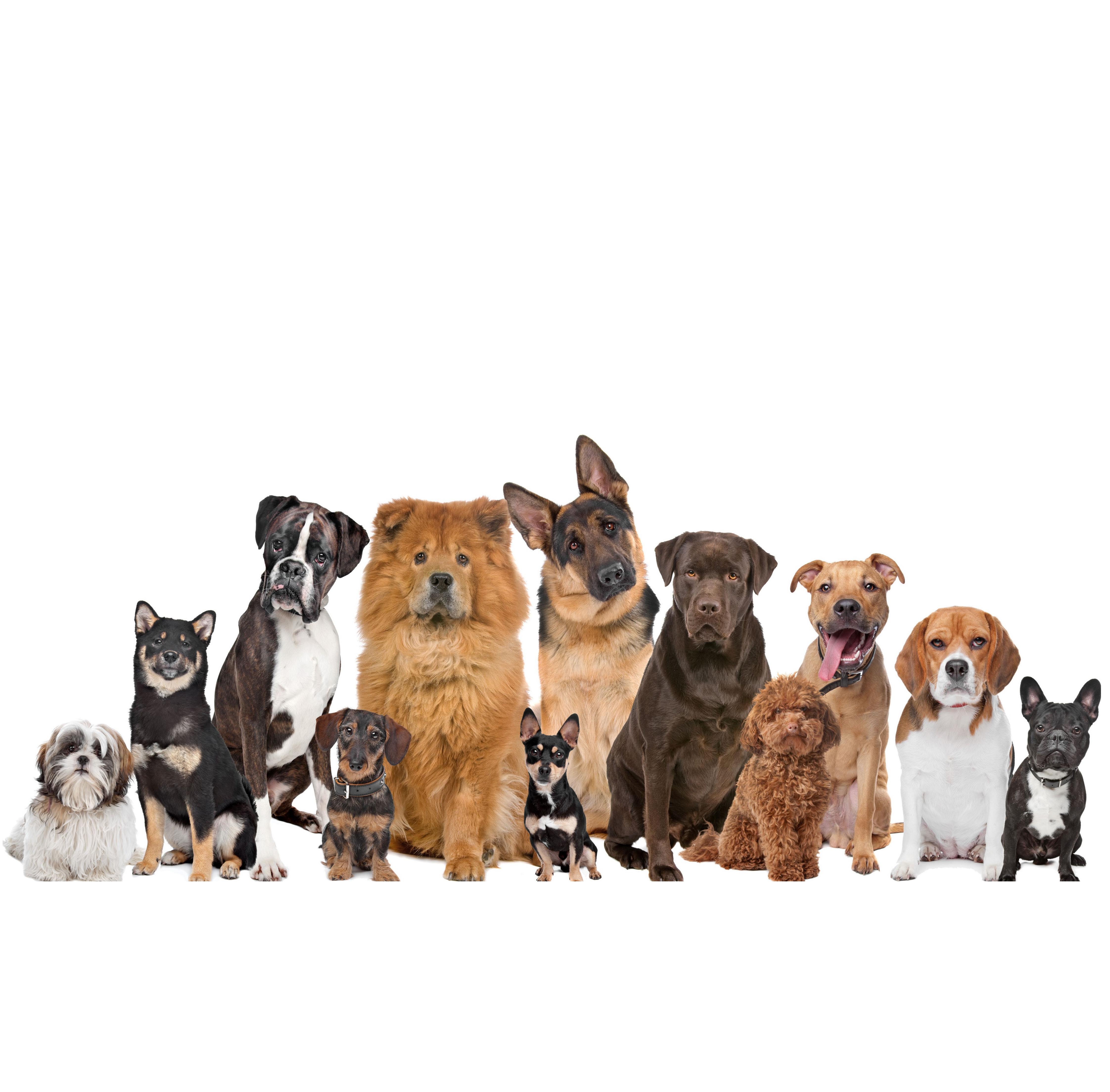 Hundepsychologe Kosten