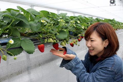 岐阜県恵那市 イチゴ狩りのふくいく農園