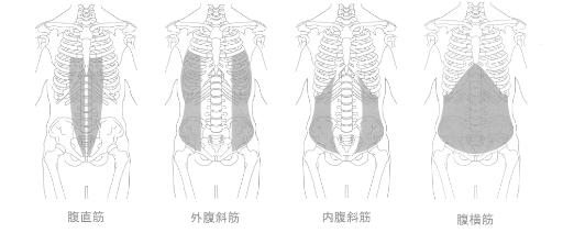 体幹部分にある主な筋肉