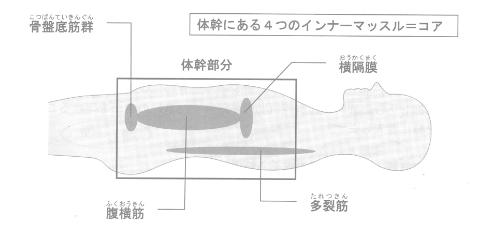 体幹とコアの位置