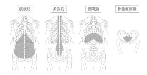 コアを構成する4つの筋肉