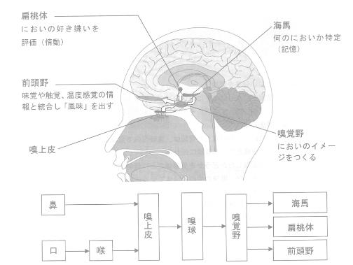 脳の中でのにおい情報