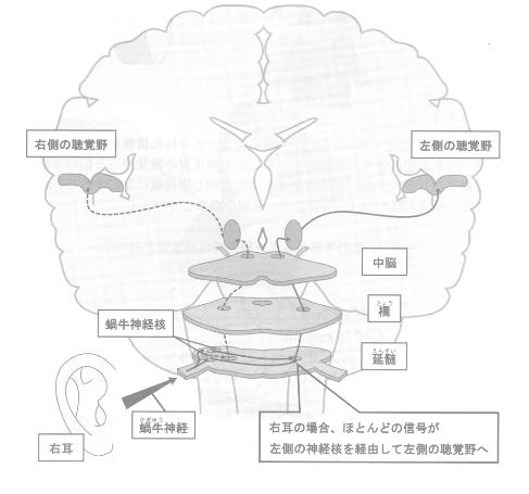 電気信号の伝達経路
