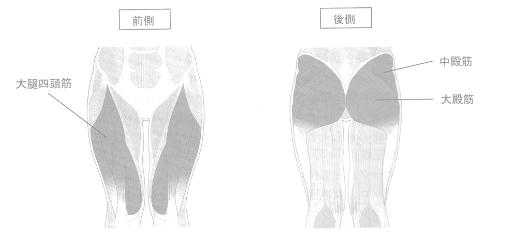 下半身の主な筋肉