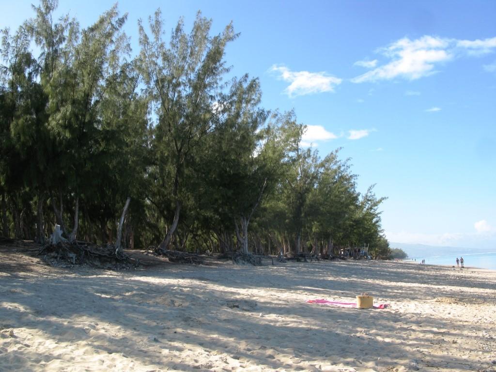 Des plages bordées de filaos