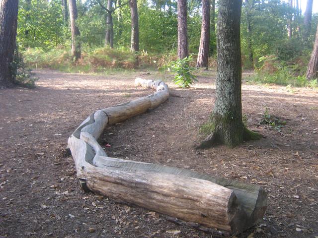 Les troncs serpentent pour indiquer la clairière