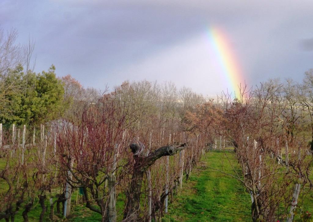 La vigne attend la taille, déterminante pour le volume et la qualité de la future récolte