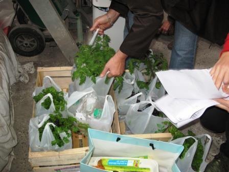 Des pieds de tomates pour les jardiniers