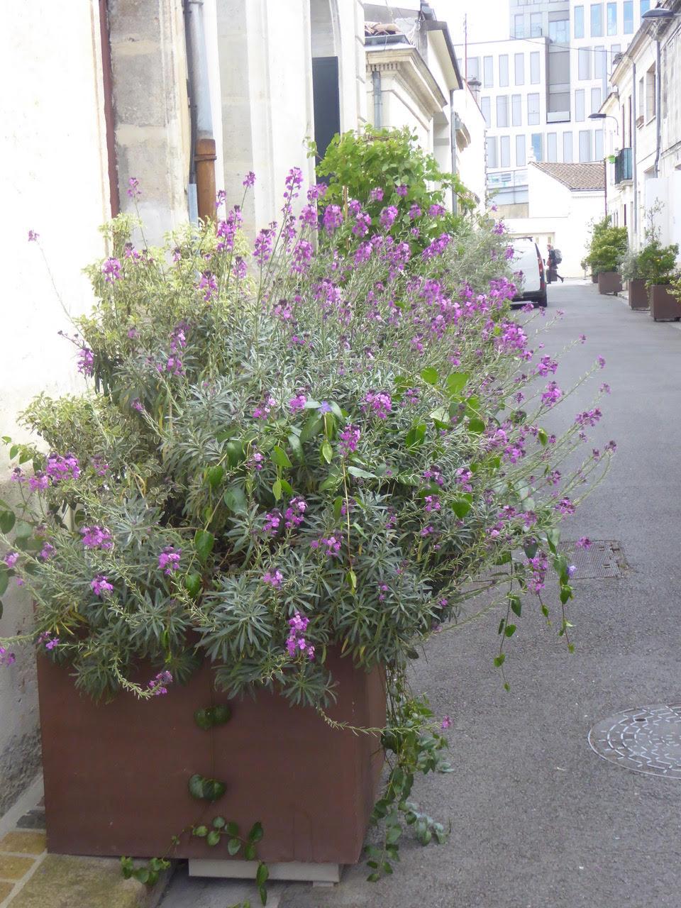 La rue Son-tay et ses tonneaux fleuris