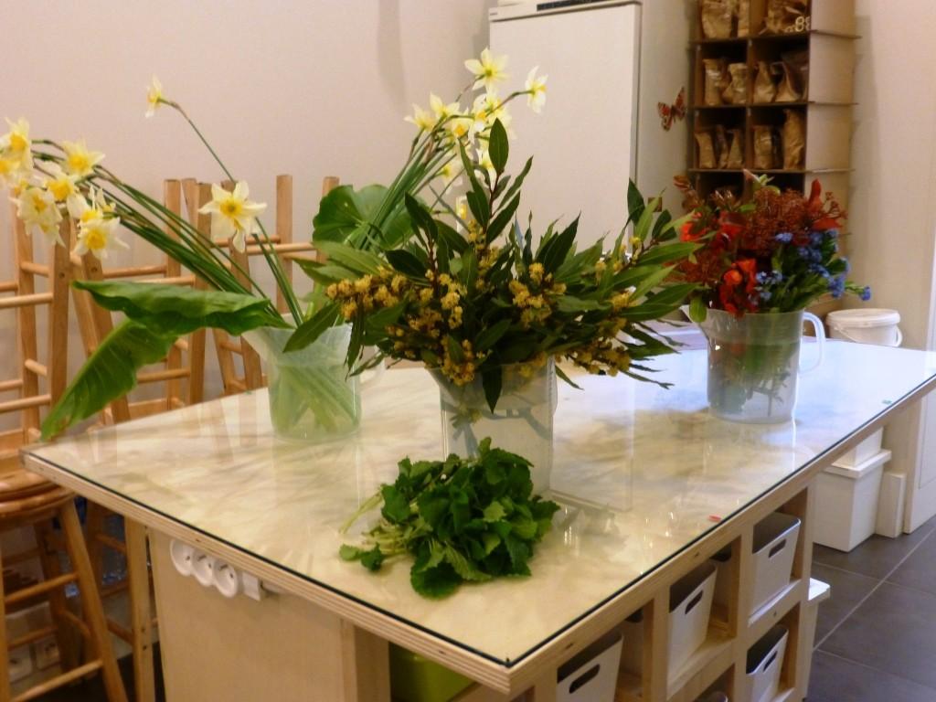 Un atelier pour s'initier à la connaissance des plantes
