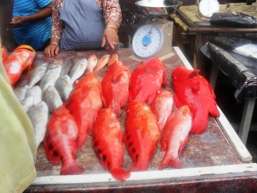 Grande diversité de poissons
